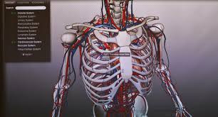 Anatomy The Human Body The Human Anatomy Animated With 3 D Technology The New York Times