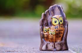 free images sweet cute owl security bird of prey children