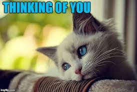 Thinking Of You Meme - first world problems cat meme imgflip