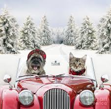 dog and cat driving car through snow photograph by john daniels