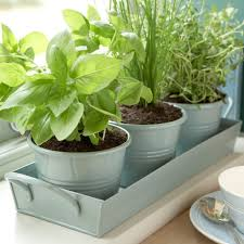 indoor herb garden pots garden increasing the design composition