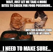Food Photo Meme - cats share food memes imgflip