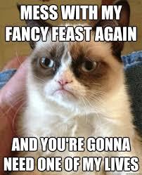 Mess Meme - mess with my fancy feast cat meme cat planet cat planet