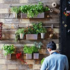 3 ways to grow and show your own indoor garden featured products