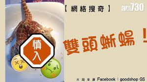 m騁ier de la cuisine 雙頭蜥蝪 網絡搜奇 am730