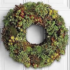 fresh wreaths proflowers 1 count green living succulent wreath