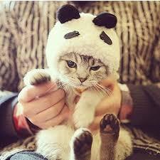 Kitten Halloween Costumes Pet 228 Pet Costumes Images Animals Pet Costumes