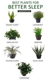 best plants for bedroom best plants to keep in your bedroom to help you sleep sleepless