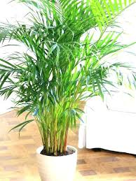 best indoor plants for low light hardy indoor plants sayhellotome co