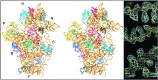 structure of functionally activated small ribosomal subunit at 3 3