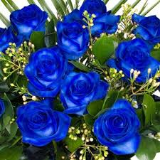 blue roses for sale cheap roses for sale fiori idea immagine