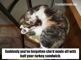 thanksgiving captions catladyland cats are funny january 2013