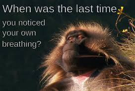 Meme Monkey - meme monkey gif find download on gifer