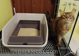the great litter box cover controversy and poll sparklecat