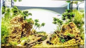 Aquascape Layout Aquadesign Aquascaping Layout Styles