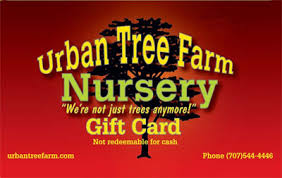 gift card trees gift cards tree farm nursery