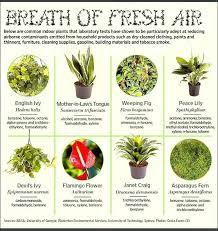 best indoor house plants good indoor house plants good indoor plants the top house plants