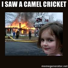 I Saw A Spider Meme - those demon camel crickets lucky otters haven