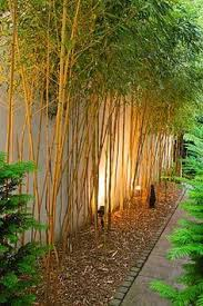 Best Trees For Backyard by The Best 10 Plants To Grow For Backyard Privacy Landscaping
