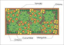 Companion Garden Layout A Companion Planting Vegetable Garden Layout Growing The Home Garden