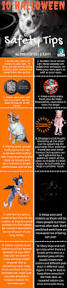 10 important tips for halloween pet safety pethub