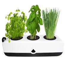 Kitchen Herb by The Green Garden Shop Kitchen Herb Grower Gp0322