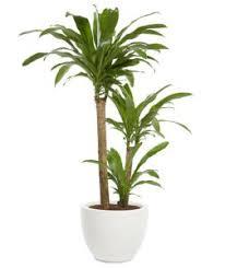 7 office plants you won t kill health