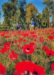 wild flowers in the holy land
