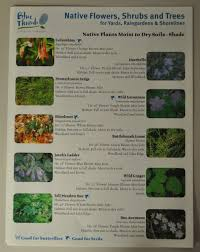 native plants for shade educational resources mcwd minnehaha creek watershed district