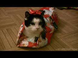 Wrapping Presents Meme - how to gift wrap a cat for christmas