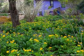 native pennsylvania plants the epa photo challenge photobotanic