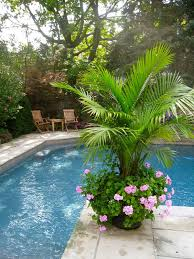 Pretty Backyards Love The Palm Pretty House Exteriors U0026 Gardens Pinterest