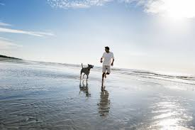 pet friendly vacation destinations hilton head island sc
