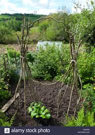 Support For Climbing Plants - unusual design of runner bean poles made from sticks to support