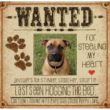 dog wanted counted cross stitch kit 8