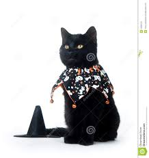 cat halloween picture top 7 cats with pumpkins animalblog cute black and white