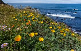 49 best california native plants disturbance at the sea ranch photobotanic