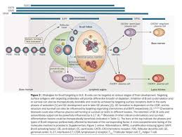 Web Analysis Report Sle by Academic Onefile Document B Cells As Therapeutic Targets In Sle