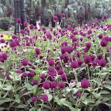 19 best flowerbed border along fence and corner images on