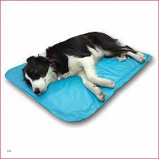 h h canapé canape canapé pour chien grande taille high resolution