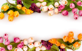 Images Flowers Beautiful Flowers Hd Wallpapers Page 2 Walldiskpaper