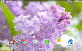 Lilac Flower by Lilac Live Wallpaper Android Apps On Google Play