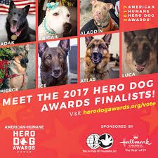 meet america s top dogs seven courageous canines named finalists