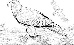 flying eagle coloring pages wingspan coloringstar