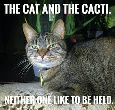 Good Cat Meme - cat memes home facebook