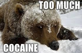 Bear Cocaine Meme - sur internet leonardo dicaprio et booba remettent l ours au go禹t