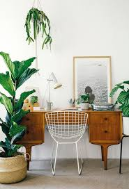 best 25 plant decor ideas on pinterest house plants best 25 desk plant ideas on pinterest desk plant decor and office