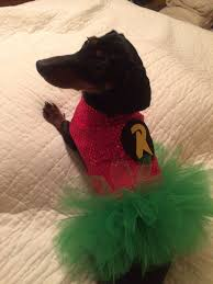 Halloween Costumes Miniature Dachshunds Dog Dachshund Superhero Robin Costume Tutu Dress