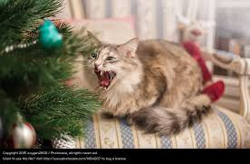 Cat Christmas Tree Meme - cats destroying the christmas tree and other kitty christmas