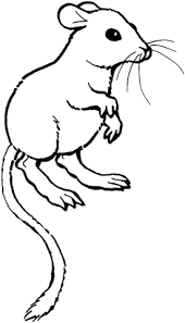 coloring page of a rat kangaroo rat coloring page free printable coloring pages